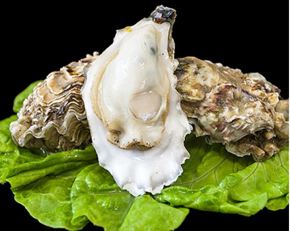 牡蛎肽的营养作用与辅助降血糖
