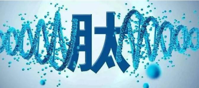 骨髓肽的作用.png